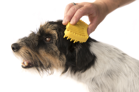 dog brushes - grooming - jack russell terrier Stock Photo