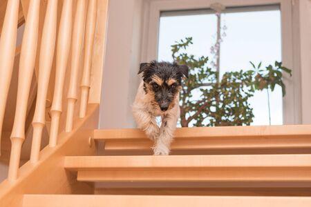 犬は滑りやすい階段を走る