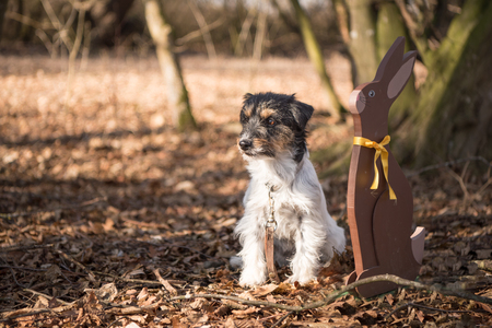 Little dog and rabbit in the forest at easter - jack russell 2 years old