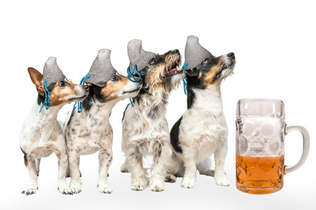 Four Bavarian octoberfest dogs - jack russell terrier