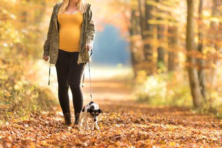 Mujer embarazada con un perro caminando en otoño - jack russell terrier