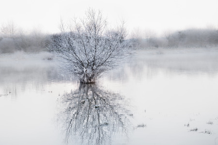 Winter landscape at lake with tree and fog