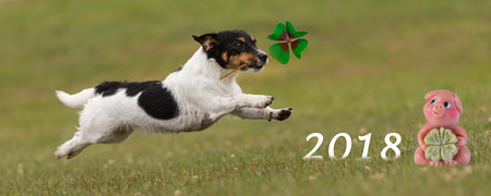 happy new year 2018 - Jack Russell Terrier