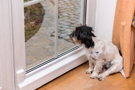 Dog is sitting on the glass door and looking out Foto de archivo