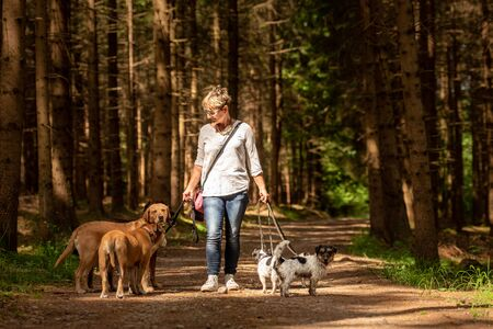 Walk with many dogs on a leash. Dog walker with different dog breeds in the beautiful forest Imagens