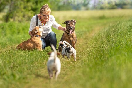Dog sitter walks  with many dogs on a leash. Dog walker with different dog breeds in the beautiful nature 스톡 콘텐츠