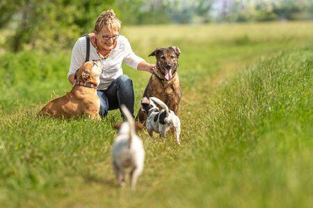Hondenoppas loopt met veel honden aan de lijn. Hondenuitlater met verschillende hondenrassen in de prachtige natuur