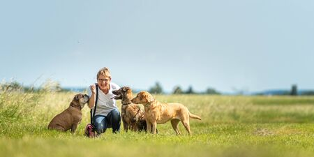 Dog sitter walks  with many dogs on a leash. Dog walker with different dog breeds in the beautiful nature Stockfoto