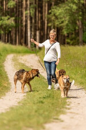Dog sitter walks  with many dogs on a leash. Dog walker with different dog breeds in the beautiful nature Banque d'images