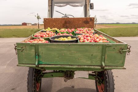 Apple and pears are transported on a front loader after harvesting in autumn. Storage in crates
