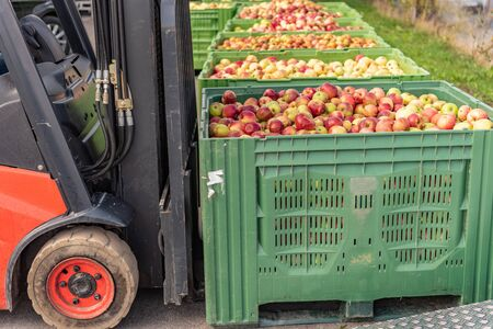 Forklift carries crates of fruit. Apples in container Stockfoto