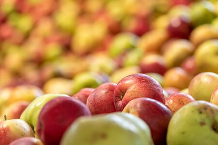 Ripe fall apples against glowing blurred background in season autumn