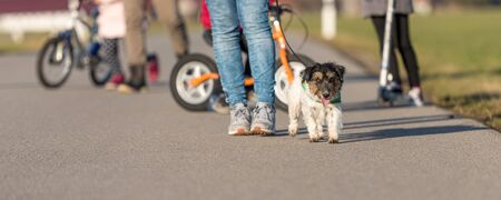 Young family goes for a walk with their little kids and leashes with their Jack Russell Terrier dog.