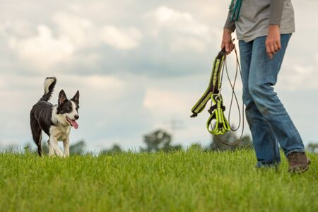Common game with an obedient dog - Border Collie and dog owner