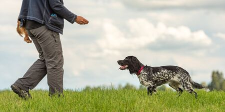 Common game with an obedient dog. Cocker Spaniel and dog owner
