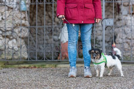 Woman is walking with a small obedient Jack Russell Terrier dog. Resting at a grotto with a saint figure. Stockfoto