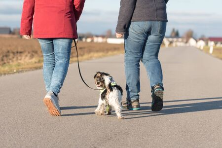 Woman is walking with a little obedient Jack Russell Terrier dog on a tar road. Dog is looking back
