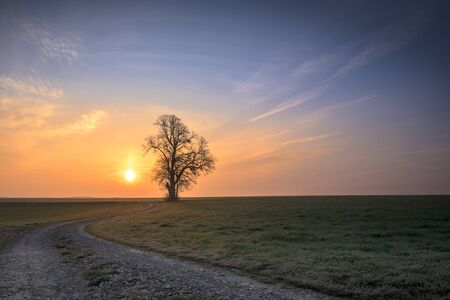 Gravel path leads to a single tree in foggy morning mood in the sunset Foto de archivo - 129985093