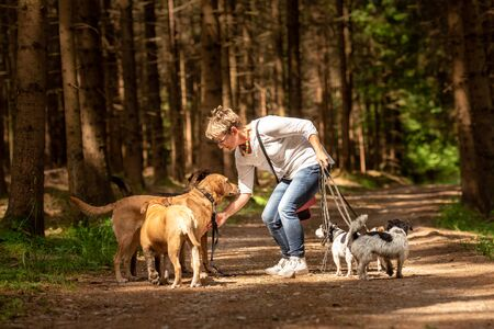 Walk with many dogs on a leash. Dog walker with different dog breeds in the beautiful forest Banco de Imagens