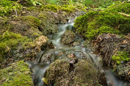 flowing clean water just after the source of the emergence in the forest. Stok Fotoğraf