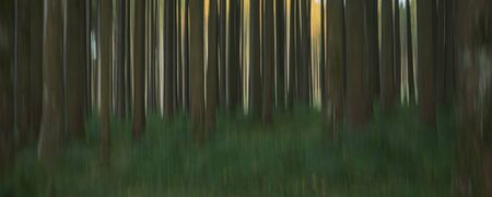 Abstract nature background in the forest. Blurred trees effect