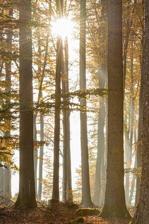 Beautiful forest in sunlight in autumn light