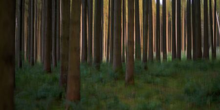 Beautiful Abstract nature background in the forest in the sunrise or sunset. Blurred trees effect