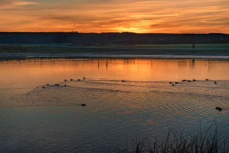 beautiful sunrise at a lake. Ducks are swimminf in the water at dusk.