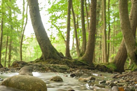 Beauty soft water stream in a green summer forest. Long Exposure.