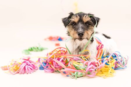 Cute Party Dog. Jack Russell ready for carnival 写真素材