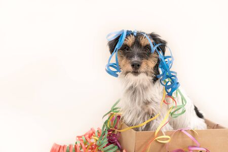 Cute Party Dog. Jack Russell ready for carnival Reklamní fotografie