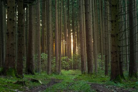 forest in sunlight in summer