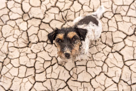 Small cute dog are sitting in a dry sandy desert and looking up - dirty Jack Russell Terriers Standard-Bild