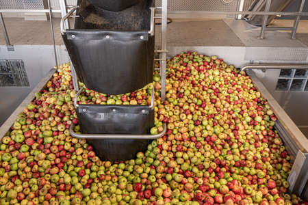 Ripe fall apples in a container, ready to squeeze apple juice