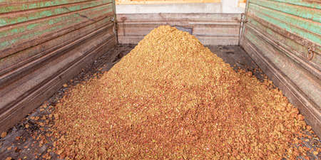 A lot of Apple pomace - By-product is produced when pressing apple juice and we use it for feeding wild game in the winter months. Standard-Bild