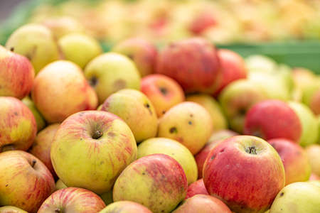 Ripe fall apples in a container in autumn