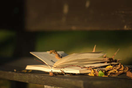 Open book on a wooden bench in autumn park.