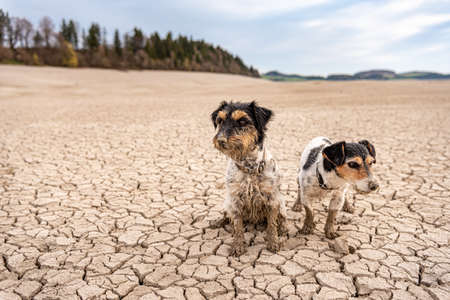 Two cute small Jack Russell Terrier dogs are sitting in the parched Forggensee in Bavary Germany Standard-Bild