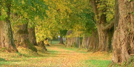 Beautiful lime tree boulevard in autumn in Germany Bavaria near Mindelheim Standard-Bild