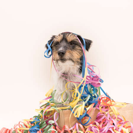 Cute party dog. Jack Russell ready for carnival