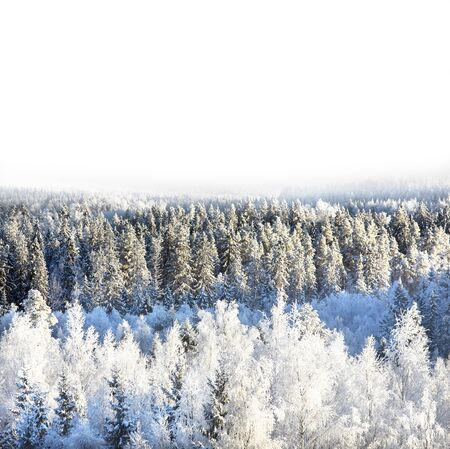 Snowy forest on sunny day photo