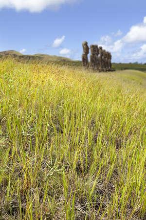 rano raraku: Moais behind green grass in Easter Island Stock Photo