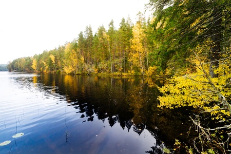 Autumn forest and a calm dark lake photo