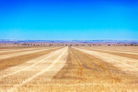 wilderness area: Empty fields and bright blue sky in Australia Stock Photo