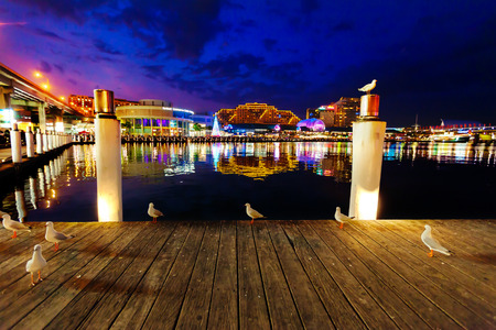 Seagulls in Sydney harbour at night with reflections of the city in the water Editorial