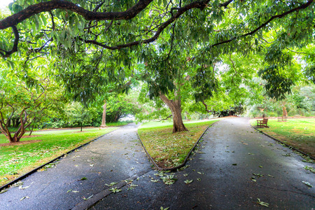 diverging: Two diverging paths in a lush green park in Sydney, Australia Stock Photo