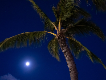 Full moon and a palm tree at night with dark blue sky