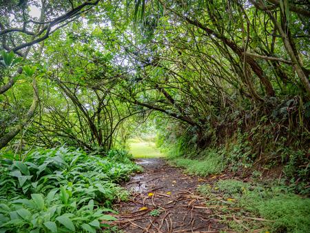 Path through lush green vegetation