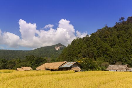 phillipine: Rice field in Thailand in the agriculture industry concept