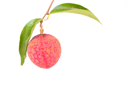leechee: Fresh lychees isolated on white background.